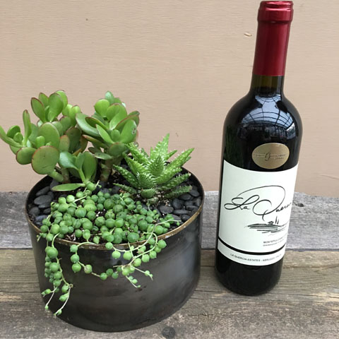Norman Succulent Garden and Wine