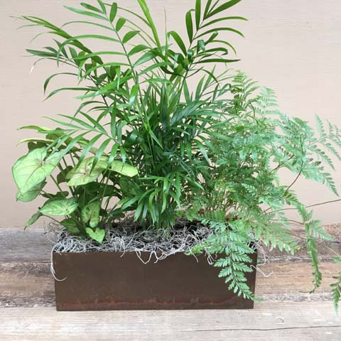Galveston Green Planter